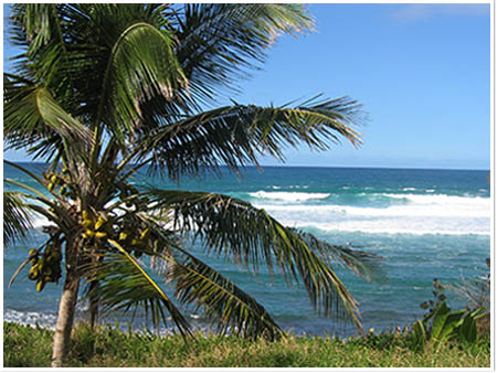 Vacations in Paradise Luxury Vacation Villas in the Dominican Republic - Palm Tree by the Beach